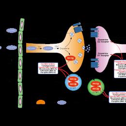 酵素 剤 酸化 モノアミン 阻害 メジコン錠15mgの基本情報(薬効分類・副作用・添付文書など)|日経メディカル処方薬事典